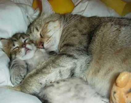 catws.jpg