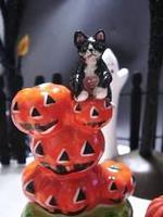 cat_pum