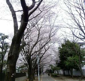 Cherry003_2