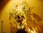 flower_ochaya