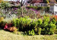 garden_tennis