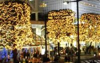 nikotama_trees
