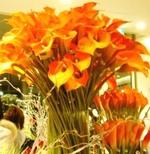 red_flower2