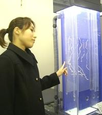 Seibutsu