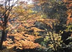 koyo_hokokuji2.JPG