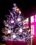 日比谷花壇のフラワー・クリスマス・ツリー